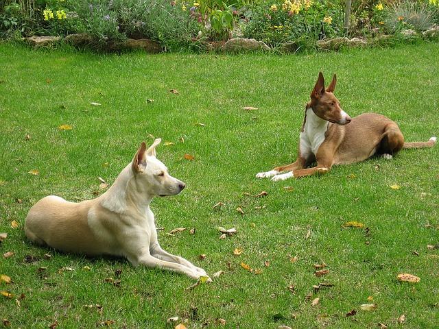 Aktiviteter för hundarna